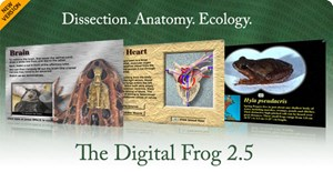 The Digital Frog 2 (CD-ROM)