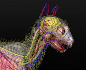 3D Cat Anatomy Software