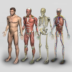 3D Human Anatomy Software